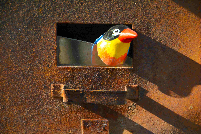 rust bird